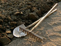 Rake and spade at the edge of ploughed ground Stock Photography