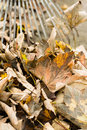 Raked leaves Royalty Free Stock Photo