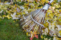 Raking autumn foliage Stock Photo
