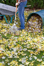 Raking autumn foliage Royalty Free Stock Image