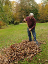 Raking Leaves Stock Photos