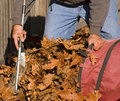 Raking Leaves Stock Images