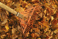 Raking leaves rake with pile of Royalty Free Stock Image