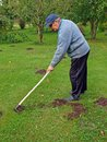Raking molehills senior country farmer smooth by rake Stock Photo