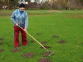 Raking molehills senior country farmer smooth by rake Royalty Free Stock Image