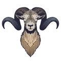 Ram head illustration