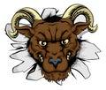 Ram mascot smash out Royalty Free Stock Photo