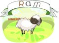 Ram with title stubborn white Royalty Free Stock Images