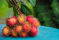 Rambutan a bunch of asian fruit Royalty Free Stock Photography