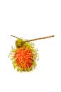 Rambutan close up tropical fruit isolated on white background Stock Photos