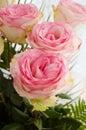 Ramo de rosas rosadas blandas Fotografía de archivo libre de regalías