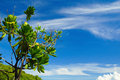 Ramo degli alberi di plumeria contro crystal blue sunny sky Fotografia Stock