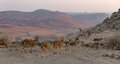 Ramon crater located in negev desert israel the is km long – km wide and meters deep and is shaped like an elongated Royalty Free Stock Photography