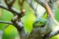 Rana de árbol Fotografía de archivo libre de regalías