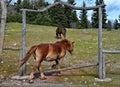 Ranch two horses on a greek mountainous Stock Photo