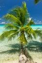 Rangiroa atoll french polynesia paradise view of Stock Photo