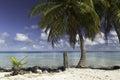 Rangiroa atoll and lagoon near tiputa pass french polynesia scuba diving paradise of thanks to avatoru the best travel destination Royalty Free Stock Photo