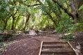 Rangitoto Island Pathways New Zealand Royalty Free Stock Photos