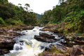 Ranomafana river in national park madagascar Royalty Free Stock Image
