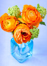 Ranunculus flowers in a blue glass vase beautiful Royalty Free Stock Photography