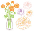 Ranunculus in a jar flower bouquet Royalty Free Stock Photos