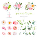 Ranunculus, rose, peony, dahlia, camellia, carnation, orchid, hydrangea flowers and decorative plants big vector collection Royalty Free Stock Photo