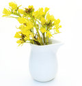 Rape blossoms in the milk pitcher pictured Royalty Free Stock Image