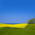 Rape field beautiful and the baltic sea in the background Stock Photo