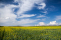 Rape field beautiful summer landscape yellow rapeseed and blue sky with clouds Stock Photography