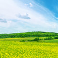Rape field and blue sky Stock Image