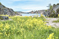 Rape field full of yellow flowers on a Norwegian Fjord Royalty Free Stock Photo