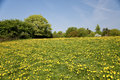 Rape field in may schleswig holstein germany Stock Photos