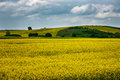 Rape field, near Marinka village, Bulgaria Royalty Free Stock Photo