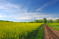 Rape field path near a summer view Stock Photo