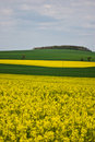 Rape fields Royalty Free Stock Photo