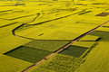 Rape fields & road Royalty Free Stock Photo