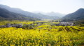 Rape flower field a in china photo was taken on feb Stock Images