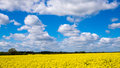Rape seed field set against the blue cloudy sky Stock Image