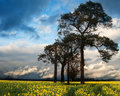 Rapeseed field contryside landscape Stock Photography