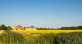 Rapeseed field and an old farm yellow flowering in agricultural landscape in summer Royalty Free Stock Photography