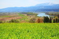 Rapeseed field and rive chikumagawa river nagano japan Stock Photography