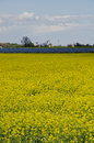 Rapeseed field with solar pannel farmland bologna Stock Images