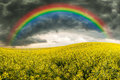 Rapeseed field stormy sky and rainbow Stock Photo