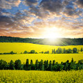 Rapeseed field in the sunset Royalty Free Stock Image