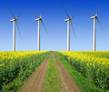 Rapeseed field with wind turbines against the blue sky Stock Photos
