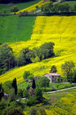 Rapeseed field yellow rape in the hills Stock Photography