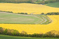 Rapeseed fields in Summer countryside landscape Stock Photos