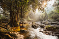 Rapid stream in evergreen forest Royalty Free Stock Photography