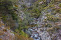 Rapids in native bush mountain stream a new zealand mid canterbury mountains woolshed creek Royalty Free Stock Image