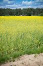 Raps field near forest the yellow houses in the Royalty Free Stock Photography